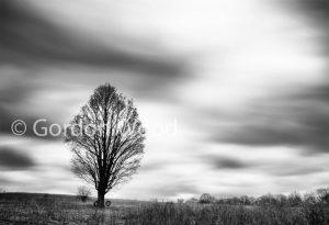 Tree_clouds_te
